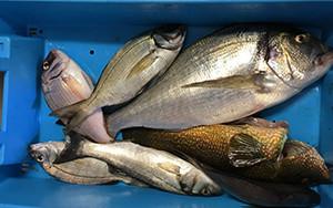 poissons pêchés